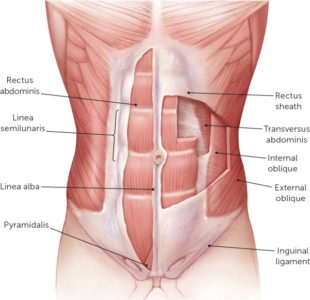Illustration of Pain From The Right Side Of The Upper Abdominal Cavity To The Front Slightly Below P?