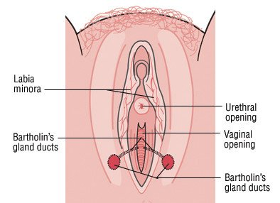 Illustration of The Antiseptic Drug Breaks The Vaginal Swelling?
