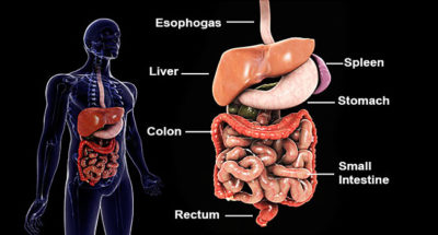 Illustration of Inflammatory Bowel Surgery In 2010?