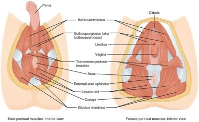 Illustration of When There Is A Strong Contraction In The Vaginal Muscles, Blood Comes Out?
