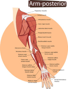 Illustration of Pain In The Back Of The Left Arm Is Almost 1th?