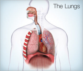 Illustration of Causes Of Difficulty Breathing From The Nose And Pain In The Left Chest?