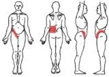 Relationship Of Back Pain With Kidney Disease?