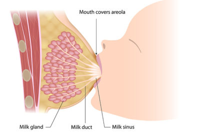 Illustration of How To Know How Much Breast Milk Is Produced?
