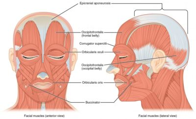 Illustration of The Facial Muscles On One Side Of The Head Seem Difficult To Move?