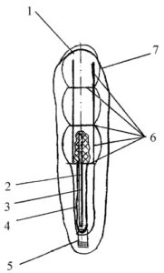 Illustration of The Spiral Thread Functions In The Vagina?