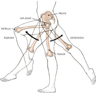 Illustration of The Left Side Of The Body Is Immovable?