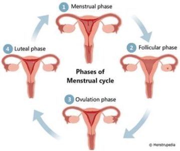 Illustration of Excruciating Pain On The First Day Of Menstruation?