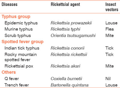 Illustration of Treatment Of Typhus In Toddlers?