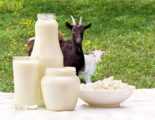 Benefits Of Goat's Milk For TB Sufferers?