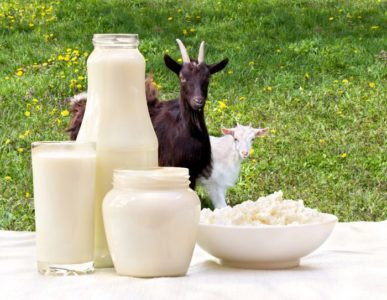 Illustration of Benefits Of Goat's Milk For TB Sufferers?
