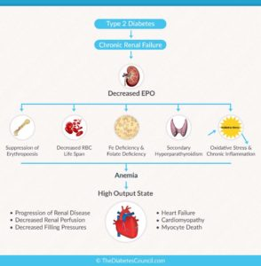 Illustration of Relationship Between Anemia And Diabetes Mellitus?