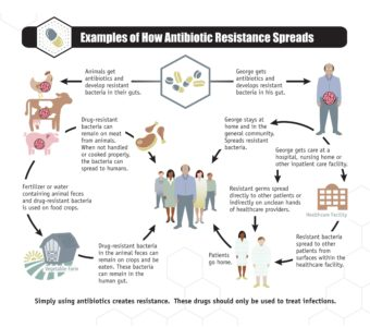Illustration of The Safety Of Taking Two Types Of Antibiotics Together With Pain Medications?