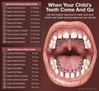 Illustration of Teething Of Molars In Adolescents?
