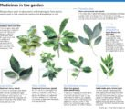 Herbal Therapy To Prevent Cancer?
