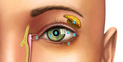 Illustration of The Eyelids Were Torn From The Inside To The Outside?
