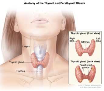 Illustration of The Relationship Between Pain During Menstruation And Thyroid Lump In The Neck?