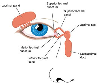 Illustration of The Connection Between The Minus 0.25 Left Eye And Sinusitis?