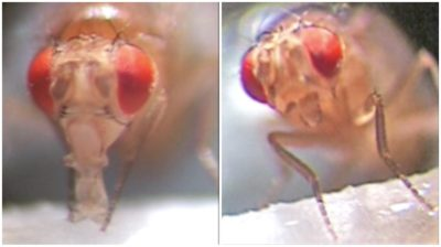 Illustration of Putting Flies In Tainted Drink As An Antidote. Is It True ?