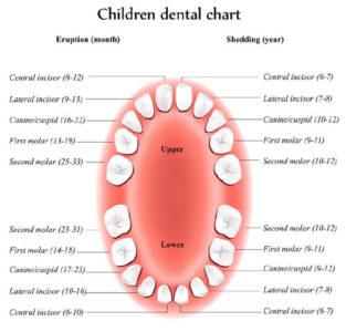 Illustration of Baby Teeth Haven't Fallen Out By 16 Years Of Age?