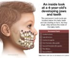 Dentition Of A 4 Year Old Child?