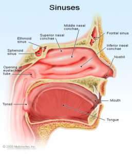Illustration of Overcoming Pain In Cavities That Spreads To The Head, Ears And Neck?