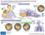 Signs And Treatment For Bird Flu?