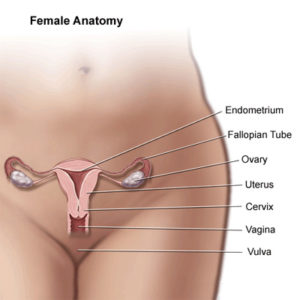 Illustration of Stomach Pain After Uterine Sterile Surgery?