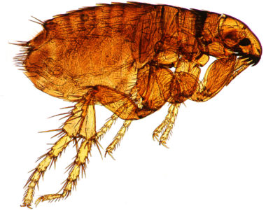 Illustration of Can Typhus Recur In The Near Future?