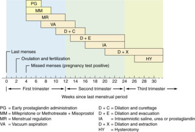 Illustration of Abortion With Indication At 3 Months Of Gestation?