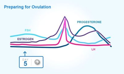 Illustration of The Menstrual Cycle Is Advanced And It Has Been More Than 7 Days And The Blood Loss Is Small?