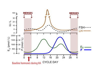Illustration of Bleeding Outside The Menstrual Cycle After Taking Hormone Drugs?