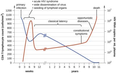 Illustration of Can HIV During The Window Period Affect Lymphocyte Values?