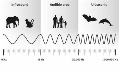 Illustration of The Right Ultrasound Frequency Limit And The Impact If It Is Excessive?