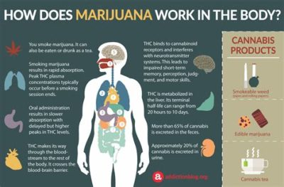 Illustration of The Possibility Of Marijuana Substances Still In The Body?