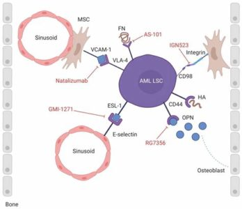 Illustration of The Location Of The Original Cell In Leukemia?