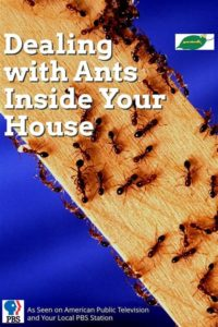 Illustration of How To Deal With Ants That Enter The Vagina?