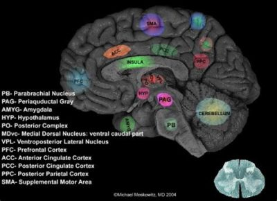 Illustration of Pain Centered In An Area Of the Brain Or Head Area When Driving?