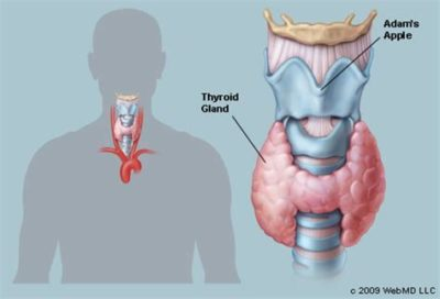 Illustration of Explanation Of The Results Of Ultrasound Of The Thyroid Gland And Its Treatment?