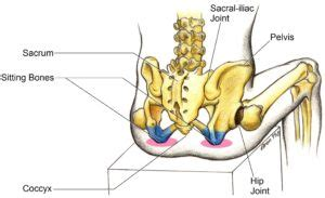 Illustration of Pain In The Bone Area Around The Buttocks?