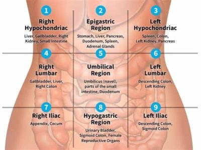 Illustration of The Left Side Of The Stomach Feels Pain That Comes And Goes?