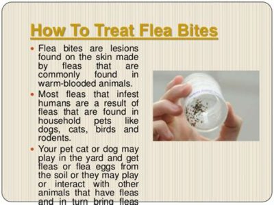 Illustration of How To Treat The Eye Area Bitten By Fleas?
