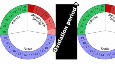Illustration of How To Calculate Fertile Period?
